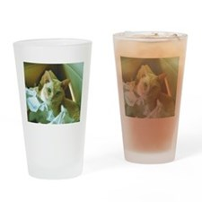 Red Burmese Cat in box Drinking Glass