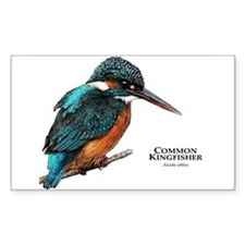 Common Kingfisher Decal