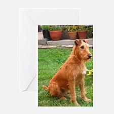 irish terrier sitting Greeting Cards