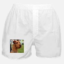 2 irish terrier Boxer Shorts
