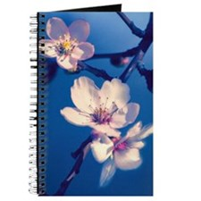 Pink Fruit Blossoms on Blue Journal