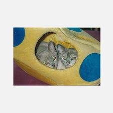 Burmese kittens  Rectangle Magnet