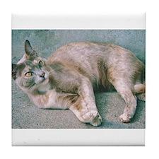 Blue Tortoiseshell Burmese Cat Tile Coaster