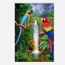 MaCaw Tropical Parrots Postcards (Package of 8)