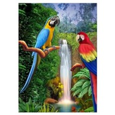 MaCaw Tropical Parrots Poster