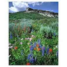 Wildflowers, Beautiful Colorado Poster