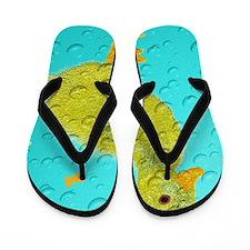 Cool Ducky Flip Flops