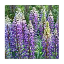 Maine Lupines Tile Coaster