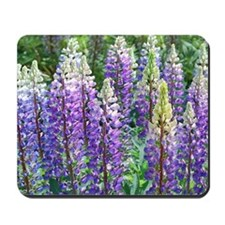 Maine Lupines Mousepad