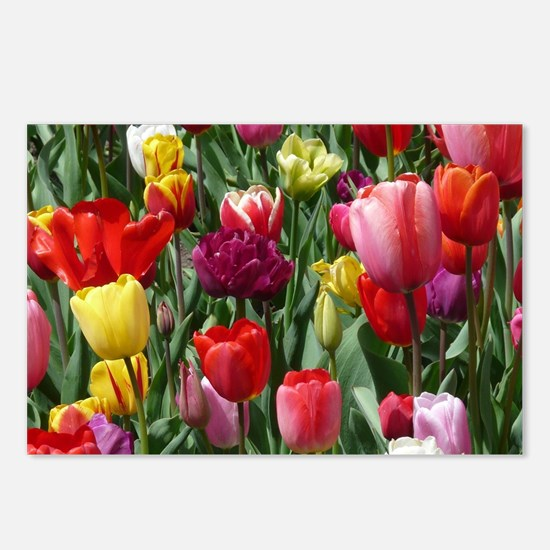Tulip_2015_0207 Postcards (Package of 8)