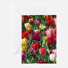Tulip_2015_0207 Greeting Cards