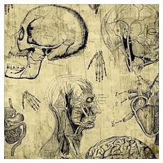 Vintage Human Anatomy Poster