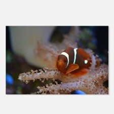 MAROON CLOWNFISH Postcards (Package of 8)