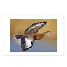 Black-Bellied Whistling D Postcards (Package of 8)