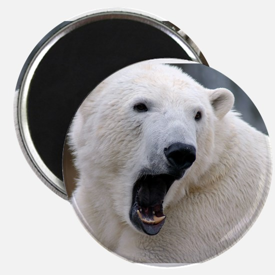 - Polar Bea Magnets
