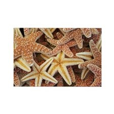STARFISH Rectangle Magnet