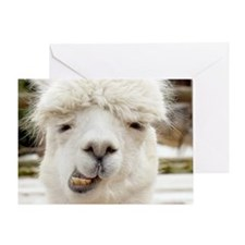 Funny Alpaca Smile Greeting Card