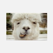 Funny Alpaca Smile Rectangle Magnet