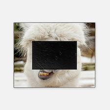 Funny Alpaca Smile Picture Frame