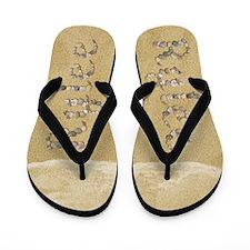 Rylee Seashells Flip Flops