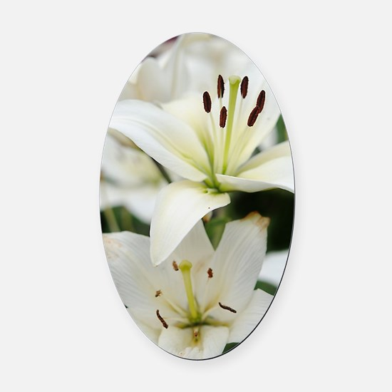 White Lilies Oval Car Magnet