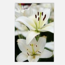 White Lilies Postcards (Package of 8)