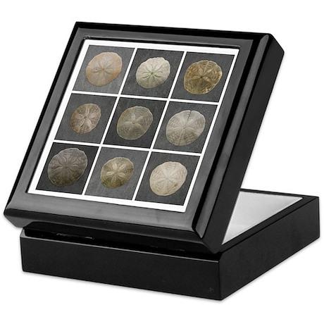 Gloucester Sand Dollar Keepsake Box