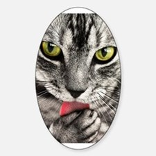 Green Eyed Tabby Decal