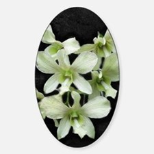 White Orchids on Black Decal