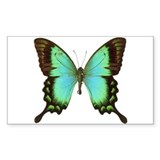 Butterfly 10 Pack