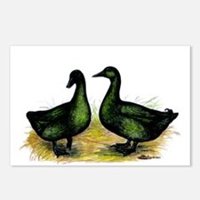 Cayuga Ducks Postcards (Package of 8)