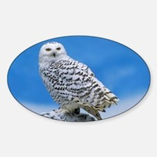 Snowy Owl Sticker (Oval)