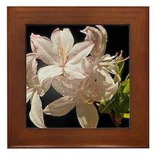 Pink Azaleas Framed Tile