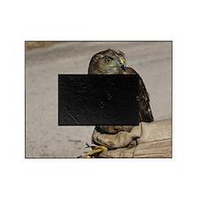 Cute Accipiter Picture Frame