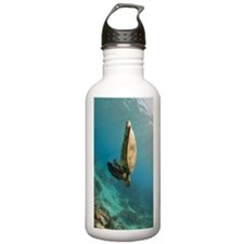 Suspended Sea Turtle Stainless Water Bottle 1.0l