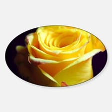 Yellow Rose Curling Decal