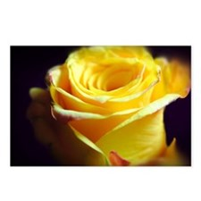 Yellow Rose Curling Postcards (Package of 8)
