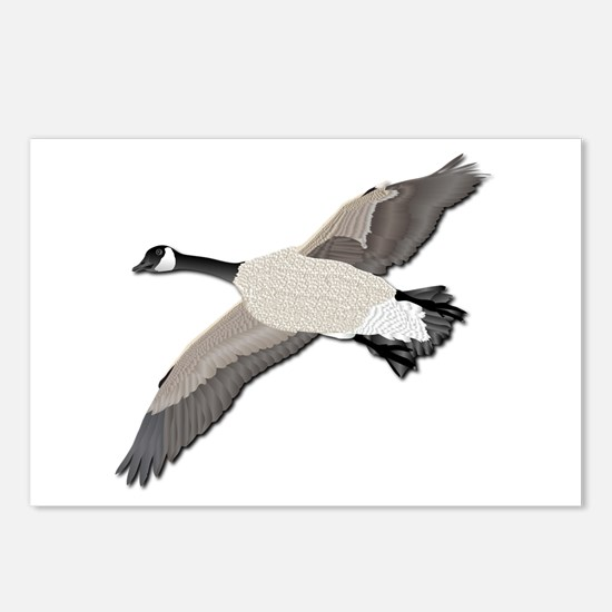 Canada goose-No Text Postcards (Package of 8)