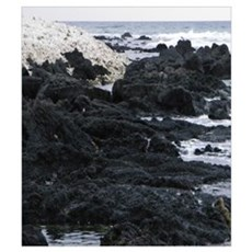 Lava Rock on the Beach Poster