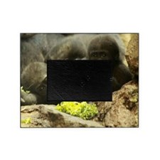 GORILLA'S BABY Picture Frame