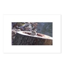 Chipmunk Hideout Postcards (Package of 8)