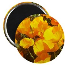 California Poppies Gifts Magnet