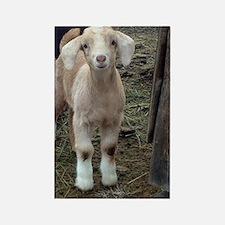 Unique Goats Rectangle Magnet