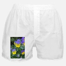 Johnny Jump Ups Boxer Shorts