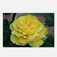 Yellow rose flower in blo Postcards (Package of 8)