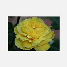Yellow rose flower in bloom in ga Rectangle Magnet