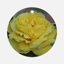 Yellow rose flower in bloom in gard Round Ornament