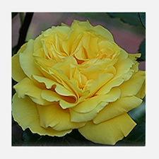 Yellow rose flower in bloom in garden Tile Coaster