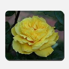 Yellow rose flower in bloom in garden Mousepad