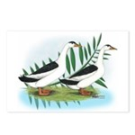Magpie Drake and Duck Postcards (Package of 8)